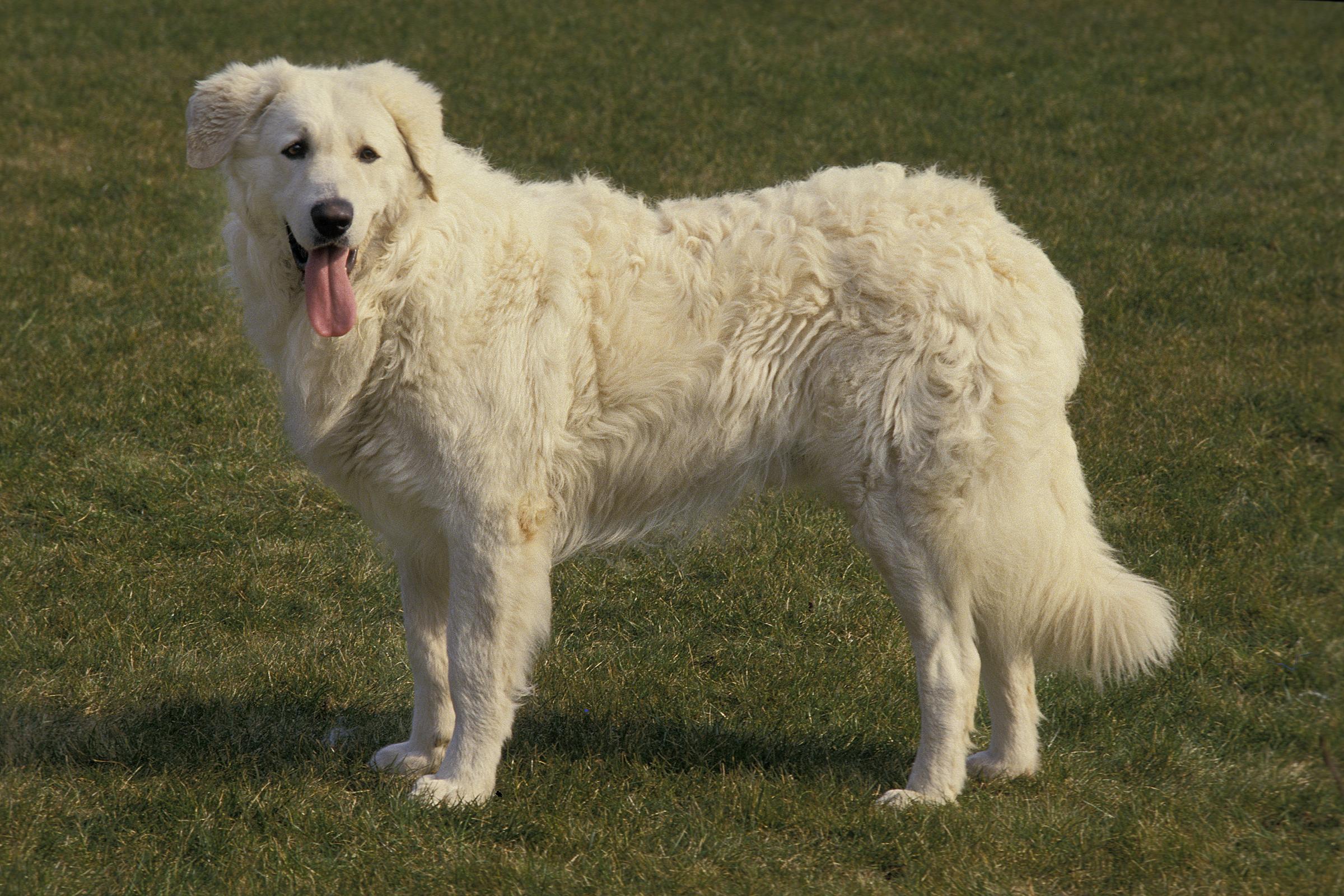 Milyen fajtájú kutyát látsz a képen?
