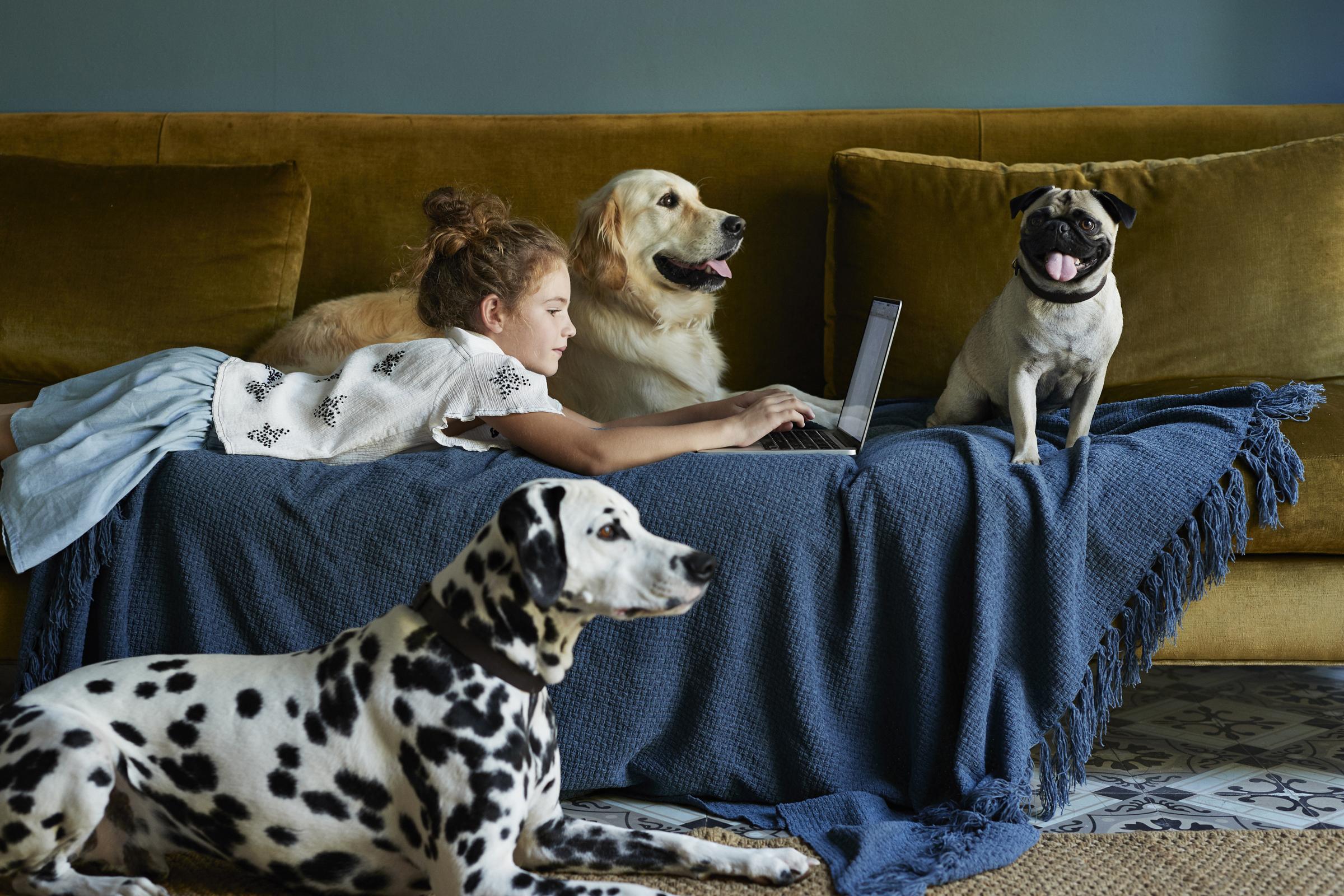 Hogyan előzzük meg, hogy két kutya találkozása verekedéssé fajuljon? Mi ilyenkor a teendő? II. rész