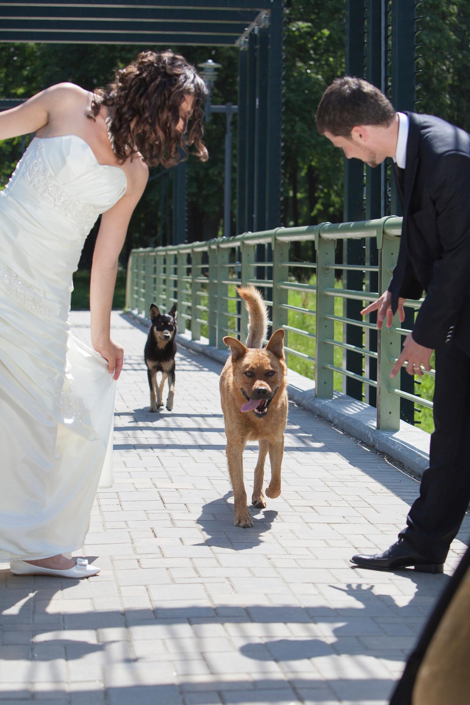 share esküvő társkereső